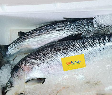 Địa chỉ mua cá hồi Nauy ở Hà Nội