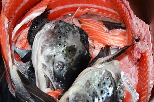 Xương cá hồi Nauy dùng làm món gì?
